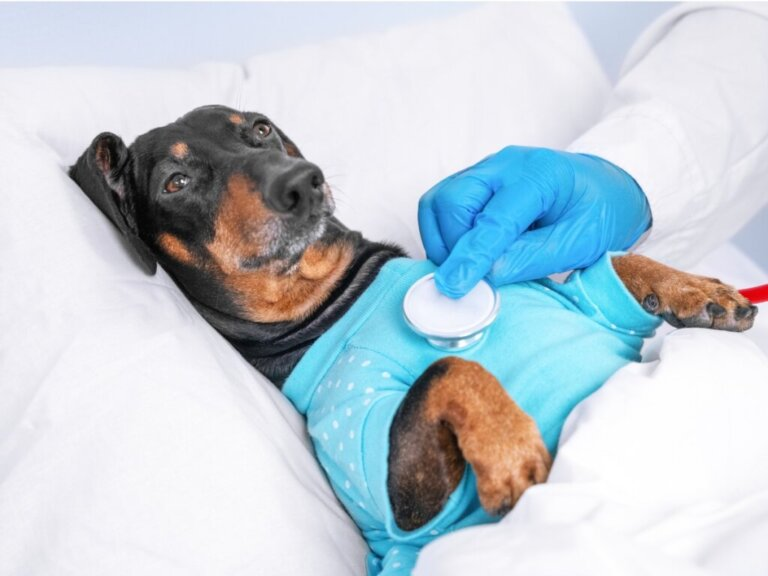 Parasitas pulmonares em cães: características, tratamento e prevenção