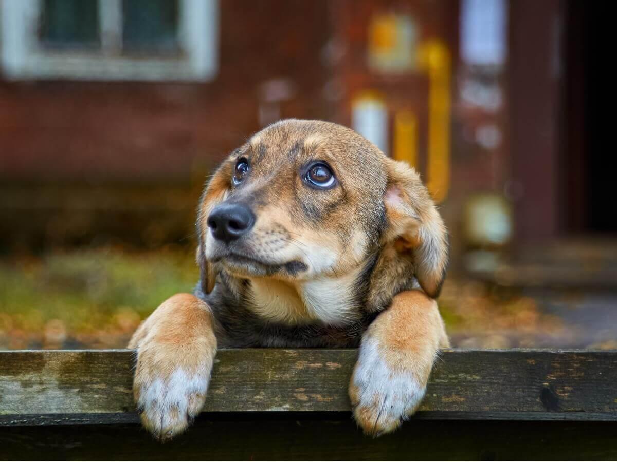70% dos cães vivem abandonados.