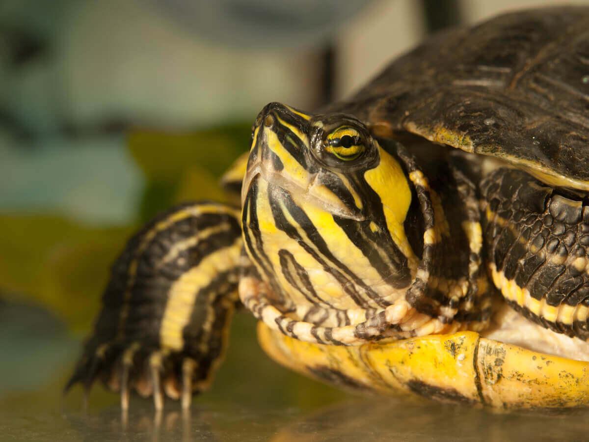Você sabe o que as tartarugas comem?