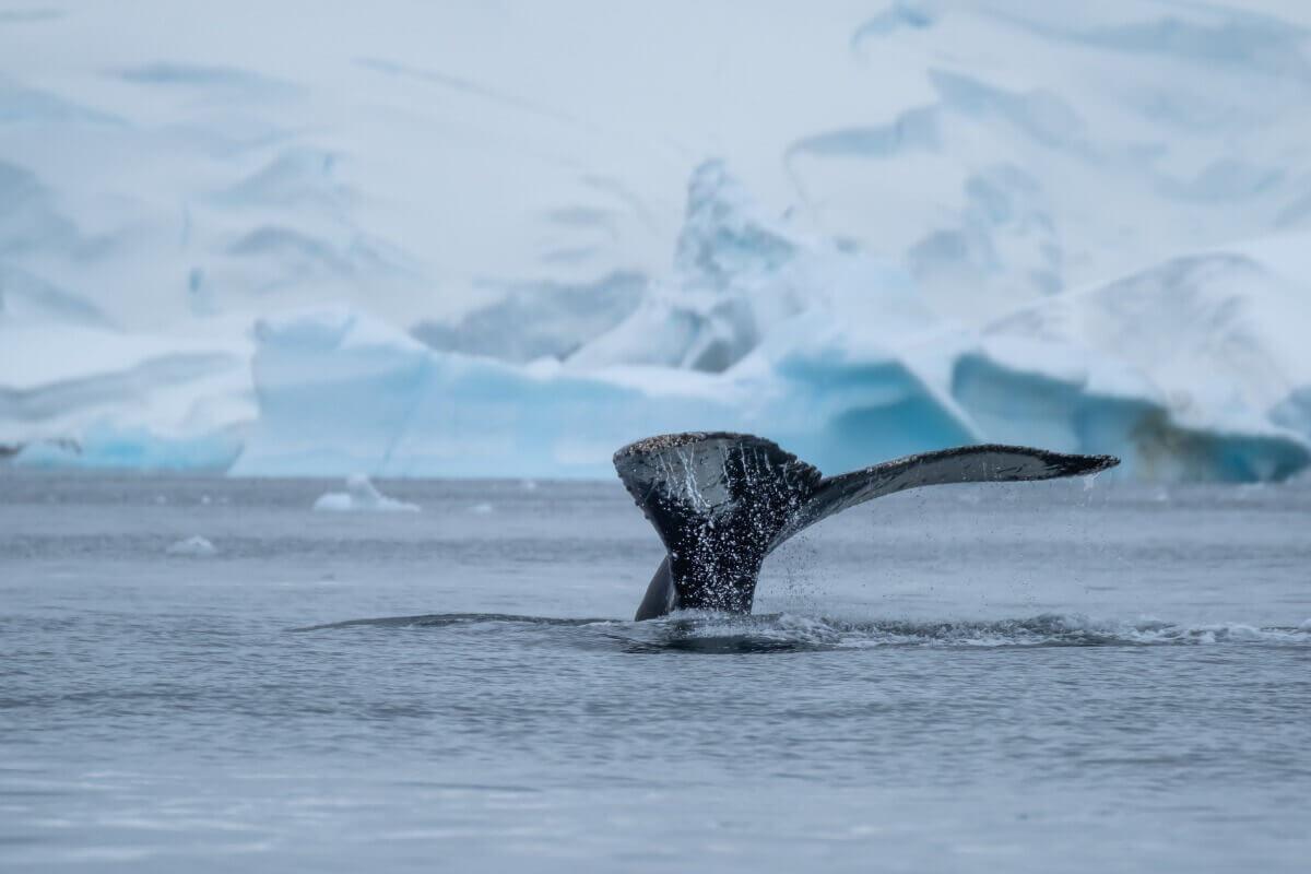 Poderia ser o Whalien 52?