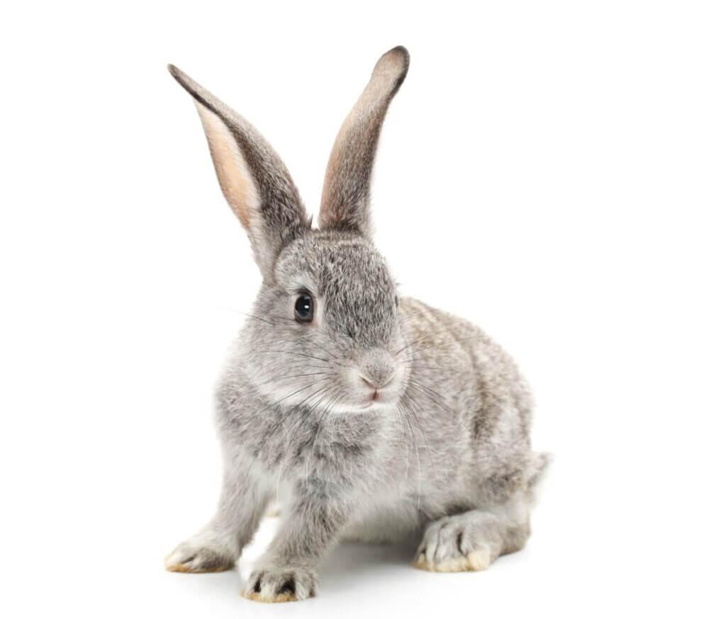 Cuidar de coelhos recém-nascidos