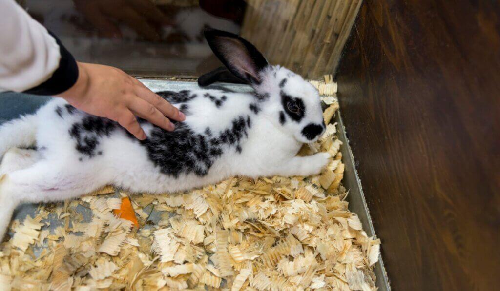 Existem muitos cuidados para os coelhos recém-nascidos e sua mãe.