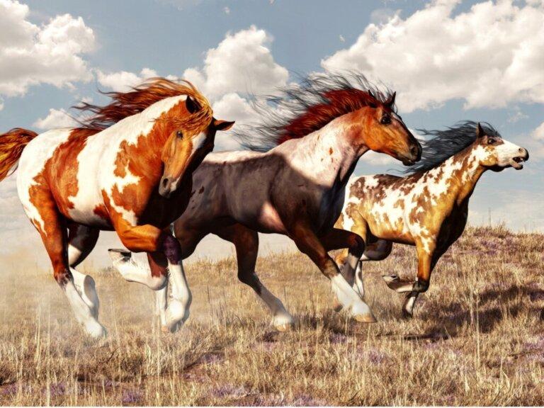 Cavalo Mustang: origem e características