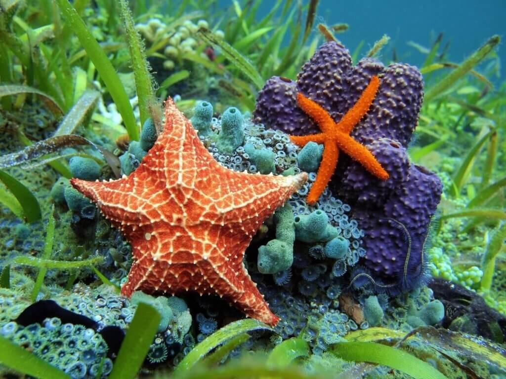 O que as estrelas-do-mar comem?