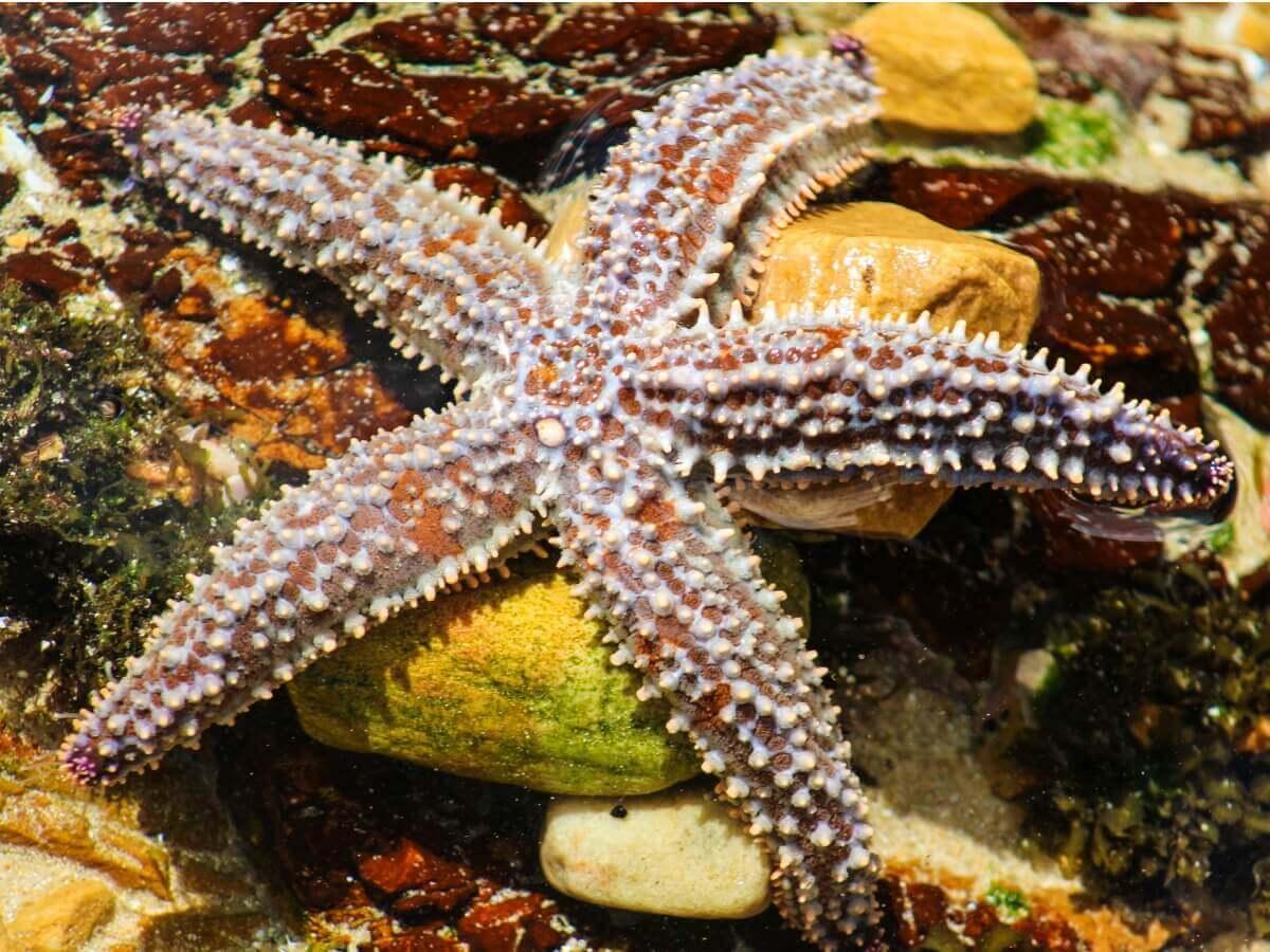 Você sabe o que as estrelas-do-mar comem?