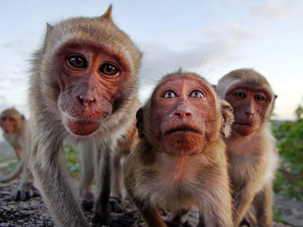 O comportamento de primatas