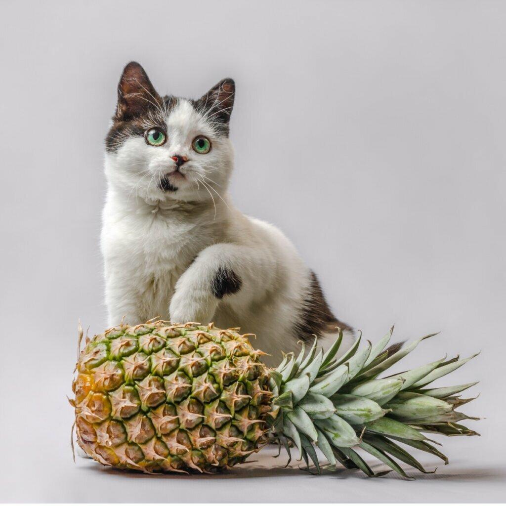 Os gatos podem comer abacaxi?