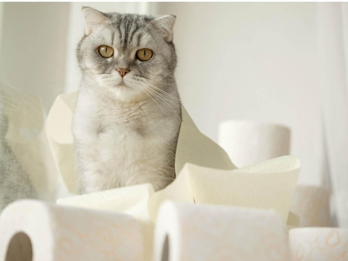 Um gato com diarreia.