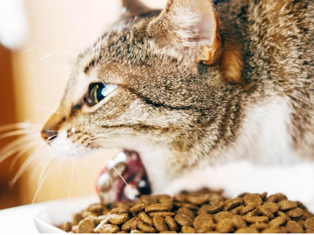 Por que meu gato vomita depois de comer?