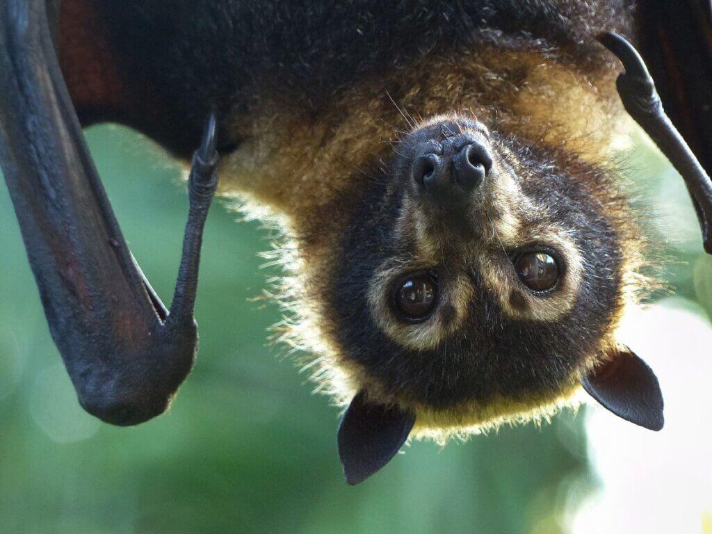 Tipos de morcegos