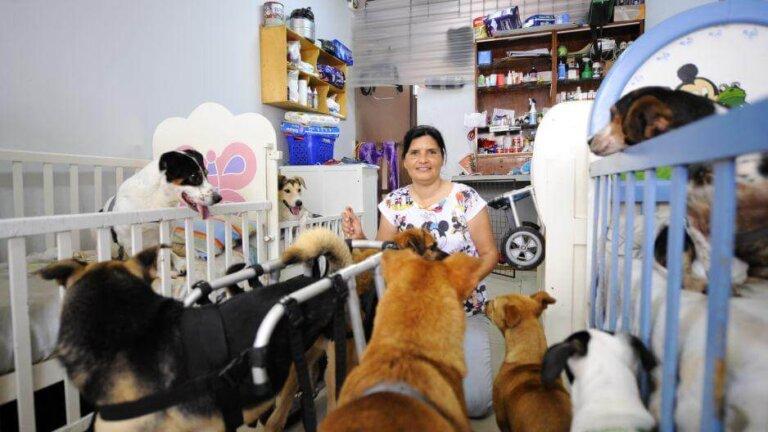 Cães deficientes: berços, cadeiras de rodas e fraldas