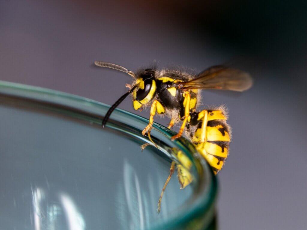 10 curiosidades sobre as vespas