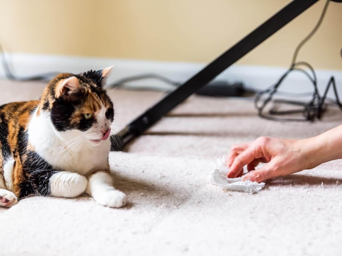Um gato que acabou de vomitar.