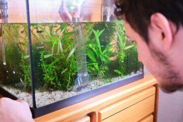 Água verde no aquário: causas e soluções