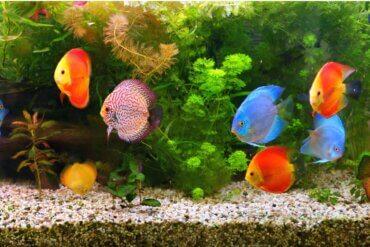 10 dúvidas frequentes sobre aquários