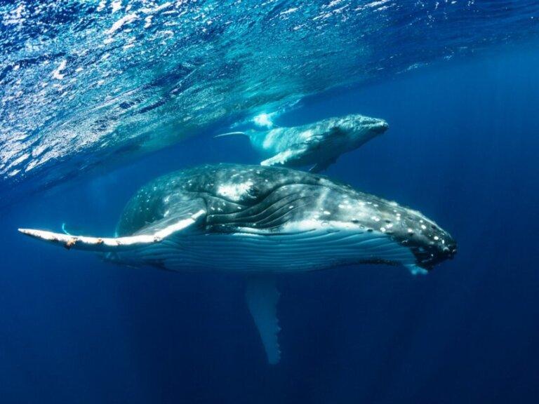 Os 10 maiores animais marinhos do mundo