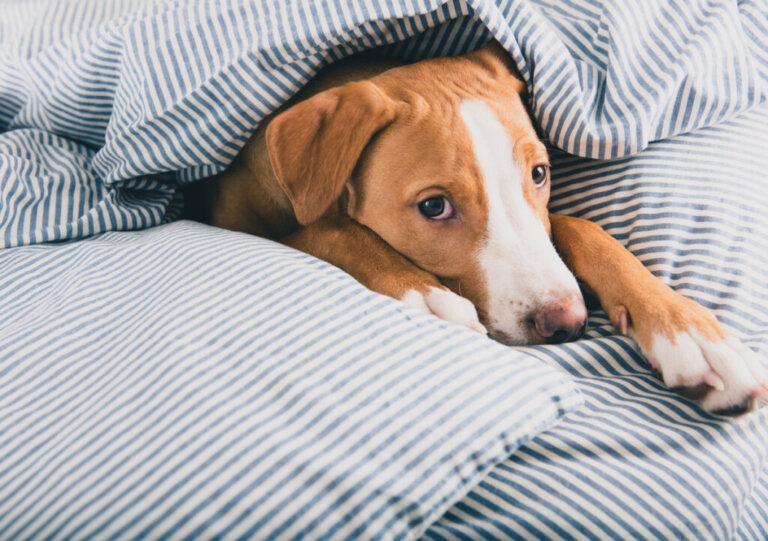 16 sintomas de doenças em cães