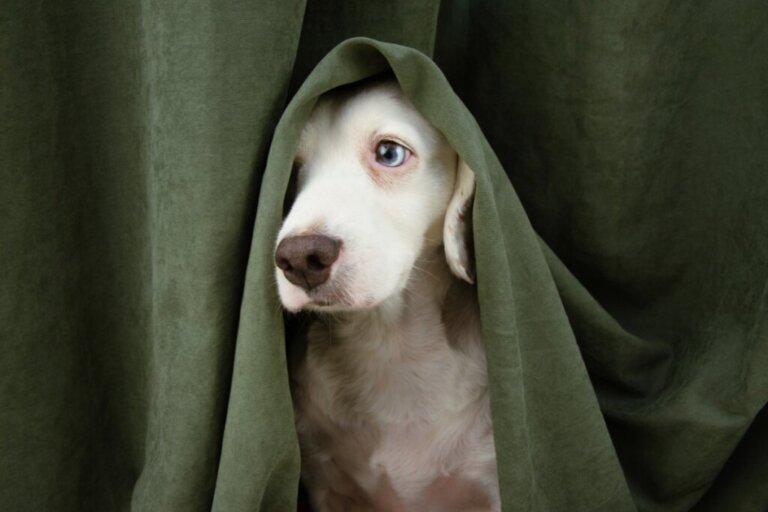 Meu cão está se escondendo de mim e está estranho: o que fazer?