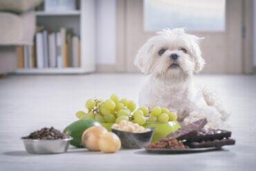Os cães podem comer nozes?
