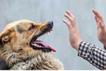 Por que meu cachorro não deixa ser tocado?