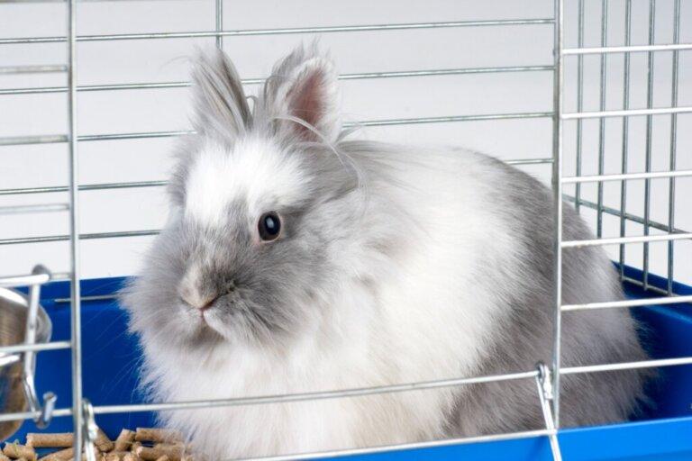 Por que meu coelho morde a gaiola?