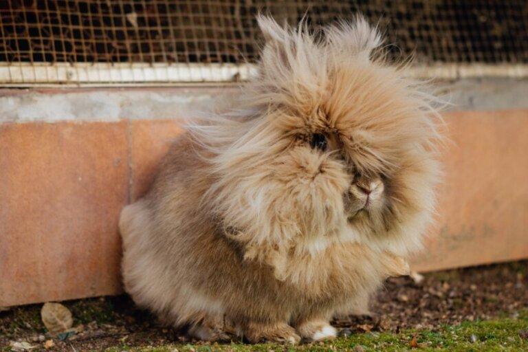 Bolas de pelo na barriga do coelho: o que fazer?