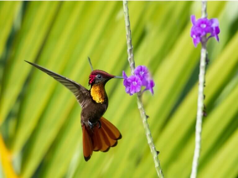 Ciclo de vida do beija-flor