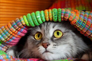 12 sintomas de que seu gato está estressado