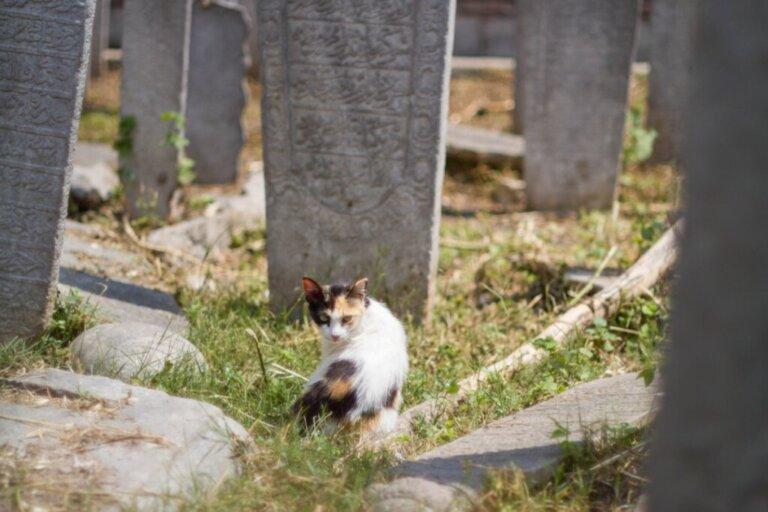 12 sintomas de que um gato vai morrer