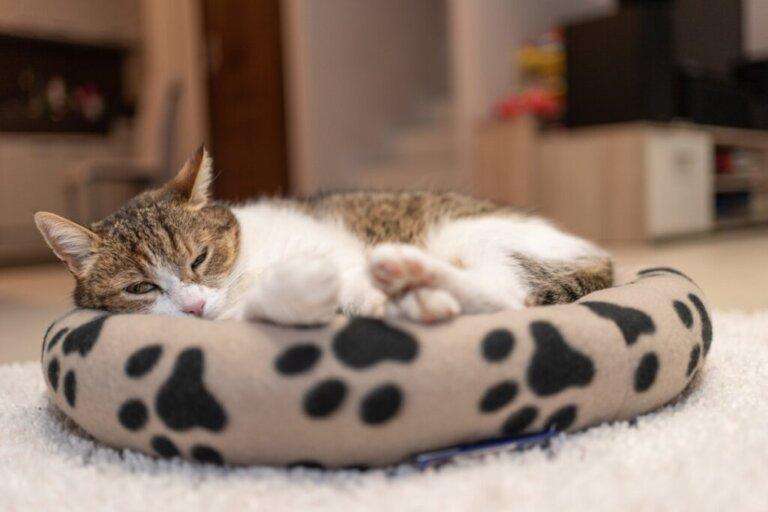 Onde seu gato deve dormir?
