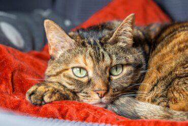 Os gatos também podem sofrer de problemas de separação