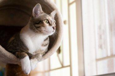 Como fazer uma academia caseira para gatos?