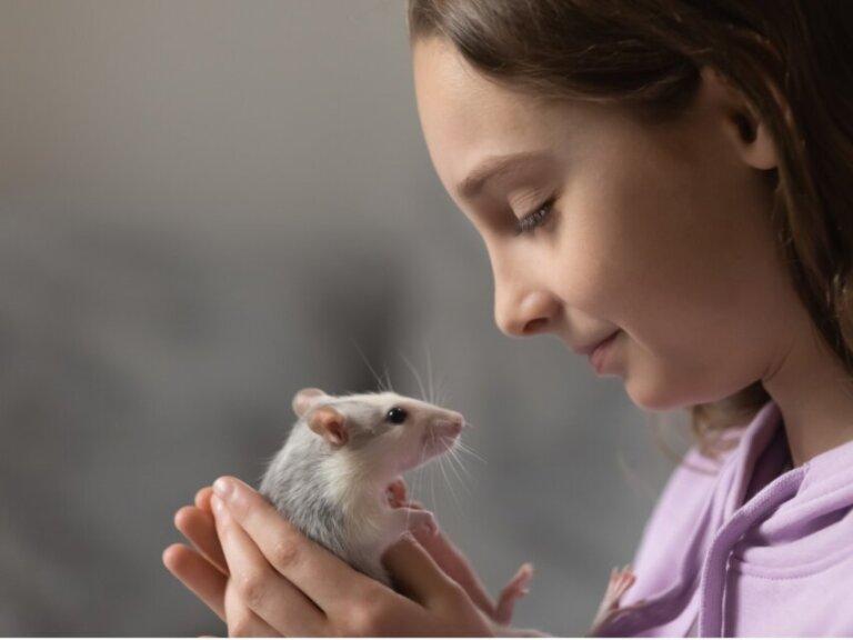 9 tipos de ratos domésticos