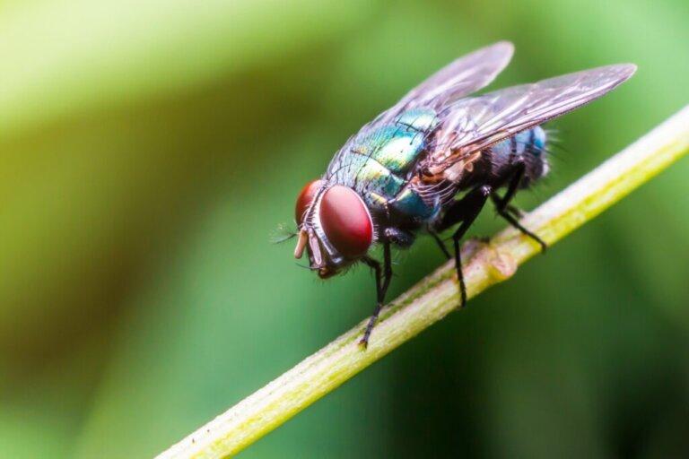 O que as moscas comem?