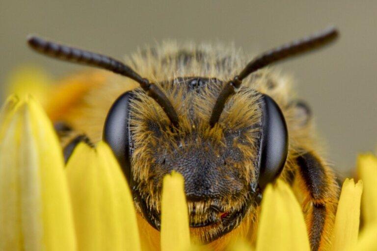 Como as abelhas enxergam?