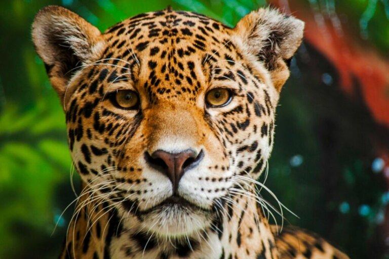 Os 15 animais mais perigosos da Amazônia