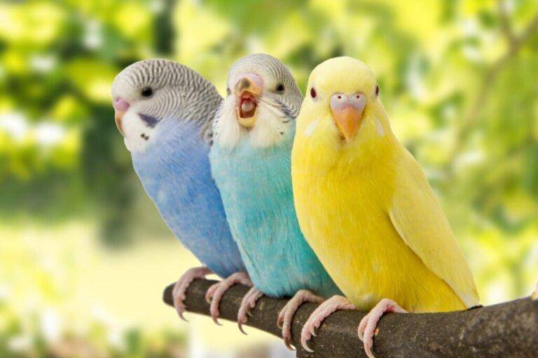 5 sinais de que seu pássaro está feliz