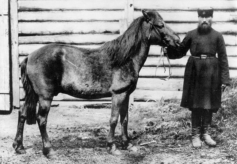 Cavalo Tarpan: origem e características