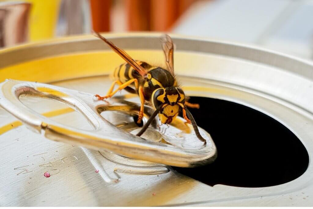 O que as vespas comem?